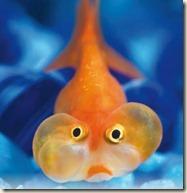 Una-casa-per-il-pesce-rosso_269